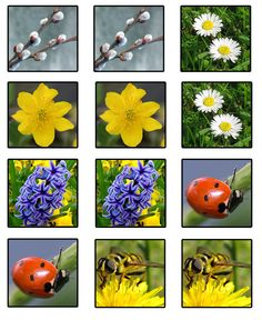 1 million+ Stunning Free Images to Use Anywhere Spring Activities, Toddler Activities, Weather Seasons, Free Printable Art, Disney Phone Wallpaper, Free To Use Images, Environmental Education, Memory Games, Happy Kids