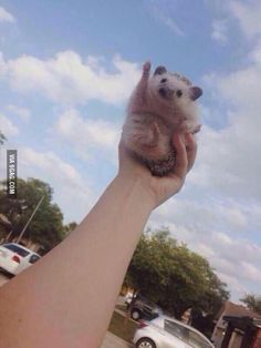 This hedgehog is here to cheer you up!