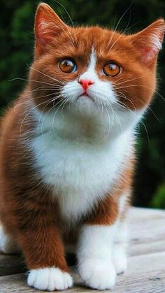 Cute Animals Kissing, Cute Baby Animals, Animals And Pets, Pretty Cats, Beautiful Cats, Cute Cats And Kittens, Kittens Cutest, Cutest Animals On Earth, Cat Plants