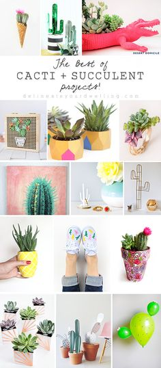 The Best of Cacti + Succulent Projects! Delineateyourdwelling.com