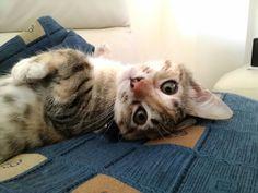 I am pretty, am I?  #cat #life #pretty #vanity