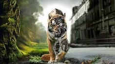 In a world that looks like it shares similarities with Will Smith's 'I Am Legend', this tiger stalks the streets as a biomechanical cyborg tiger. 3d Animation Wallpaper, Robot Wallpaper, Tiger Wallpaper, Animal Wallpaper, Wallpaper Downloads, Nature Wallpaper, Amazing Wallpaper, Windows Wallpaper, Wallpaper Gallery
