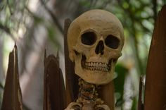 Disneyland Deaths - The Most Famous Deaths at Disneyland