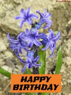 birthday gif with beautiful flower Happy Birthday Greeting Card, Beautiful Flowers, Plants, Plant, Planets
