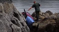 Beached Orca Rescue In BC