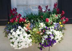 Kwiaty balkonowe cieniolubne – na balkon północny i wschodni