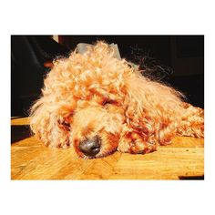 . とろ〜ん♡ . 日向ぼっこ☀️ . 気持ち良さそう😁✨ . いってきまーす🏃💨 . 今週も皆様にとって素敵な一週間になりますよぉーに♡ . #トイプードル #トイプ #犬 #愛犬 #日向ぼっこ #太陽 #ポカポカ #気持ち良さそう #可愛い #毎日の癒し #ミス日本 #ファイナリスト #missnippon #missjapan #finalist #関西 #大阪 #滋賀 #kansai #osaka #shiga  #歯科医師 #dentist #月曜日 #今週も頑張ります #いってきます