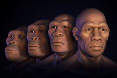 AUSTRALOPITECO, HOMO HABILIS, HOMO ERECTUS Y HOMO SAPIENS. Asi surgió el rostro humano | Ciencia | EL PAÍS