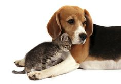 Help Feed Millions of Shelter Animals Nationwide