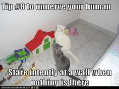My cat does this all the time!