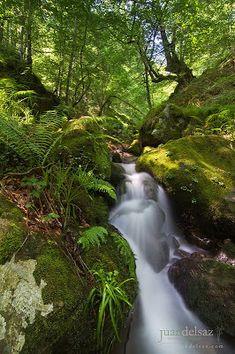 El cazador de Momentos: Un paraíso verde - Parque Natural Saja Besaya I/2