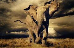 The Glory of the Elephant