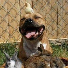 Día Mundial de los animales Cuidados esenciales para las mascotas - Terra Chile