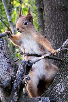 Squirrel! Ha ha this one is funny AND it is funny I feel a need to repin all the squirrels I find because they remind me of my dad!