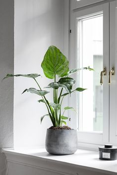 Beautiful Indoor Plants Design in Your Interior Home Bring nature inside with residence plants. Green Plants, Potted Plants, Foliage Plants, Easy Care Indoor Plants, Indoor Plant Pots, Indoor Garden, Home And Garden, Interior Plants, Plant Design