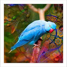 Fabric Patch Design 121-160 « NATURESFACE ART  un artiste australien qui imprime ses photos sur des coupons de tissus