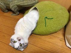 「帰ってきたら、羽化してた」 繭からぬるりと体を現す謎ポーズの猫が激写される - ねとらぼ http://nlab.itmedia.co.jp/nl/articles/1701/24/news094.html