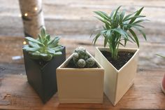 Mini Triangular Planters by The Sill