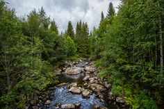 Эрика Колана / Nikon D4 / лес, природа, пейзаж