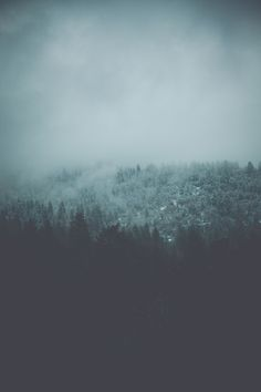 Nature + Landscape Photography Inspiration · Beautiful Moody Outdoors · Forest