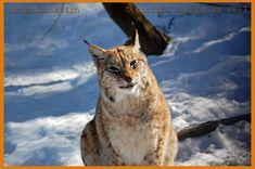 Portfolio Multimedeia: tammikuuta 2014 Lost In Translation, Ex Libris, Culture Travel, Ecology, Panther, Travel Photos, Cats, Nature, Artwork