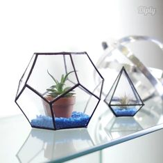Upcycle old CD cases into beautiful terrariums