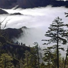 A beautiful foggy morning in The Great Smoky Mountains