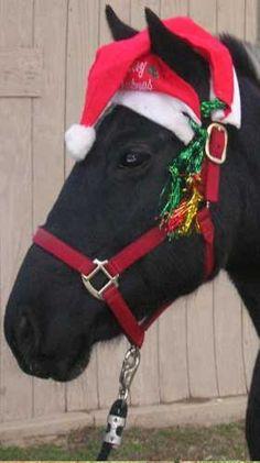 Horses at Christmas...