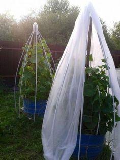 Organic Gardening – Organic Gardening Tips Garden Trellis, Vegetable Garden, Organic Gardening, Gardening Tips, Kitchen Gardening, Culture Tomate, Organic Vegetables, Homestead Survival, Raised Beds