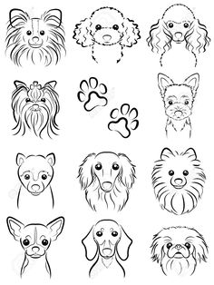 Dog / Line drawing Stock Vector - 31655861