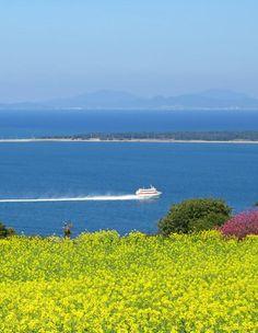 Nokonoshima Island Park, Fukuoka, Japan, Flower