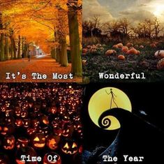 It's almost summer which means its almost Halloween Halloween fall autumn summer summertime nightmarebeforechristmas Halloween Quotes, Halloween Pictures, Halloween Horror, Fall Halloween, Happy Halloween, Halloween Stuff, Halloween Meme, Halloween Party, Halloween Countdown