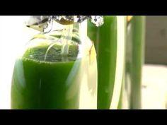 Energy 101: Algae-to-Fuel | Department of Energy
