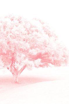 Frosted Pretty Tree Fine Art 8x12 Metallic Dream Like Photo Print. $20.00, via Etsy.