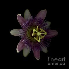 """""""Passion Angle Front,"""" Copyright Heather J. Kirk"""