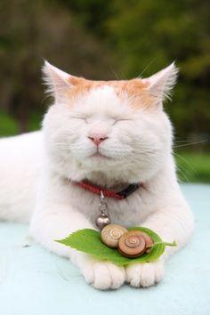 snails | http://kagonekoshiro.blog86.fc2.com/