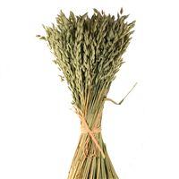 Decorative Dried Grasses