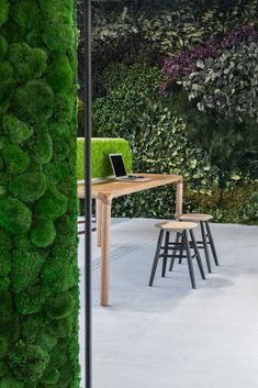 Nature inspired design that speaks to function: acoustic, wellbeing, antistatic and air quality improvement! Find them at Forest Homes Real Plants, Exotic Plants, Types Of Plants, Indoor Plant Wall, Indoor Plants, Vertikal Garden, Moss Wall Art, Real Nature, Forest House