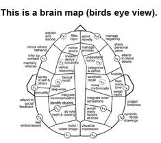 right side of brain emotions - Yahoo Image Search Results