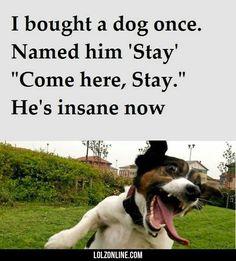 I bought a dog once…