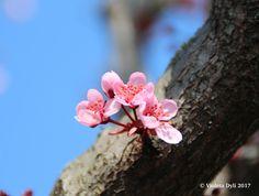 Primavera è arrivata in anticipo . Fotografia realizzata in data 13 Marzo 2017