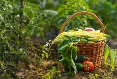 """#HealthNews - USDA Power Play Threatens the Future of Organic Foods - Last week saw an inter-agency power grab. It begins with the weakening of organic standards—and could end with the term """"organic"""" becoming practically meaningless. Click image to read more..."""