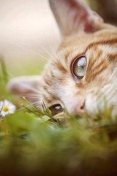 les chats, ces éternels songeurs...