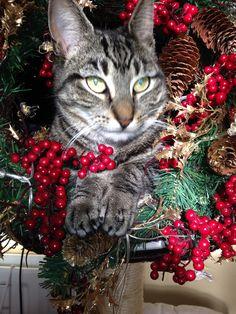 Bramble Muzz Cat | Pawshake Colchester