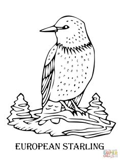 European Starling Coloring Page