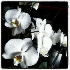 Orchidea #MakyFlowers