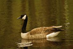 Duck by Priya Rajkumar on 500px