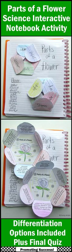 Parts of a Flower: Students will color then cut out the two flower shapes. After it is attached to their science interactive notebooks, they will need to identify which part of the flower the definition is describing and write it on the flap. A separate word bank is provided if needed. A final quiz is also provided. (Science Plants Vocabulary Grades 4, 5, 6) https://www.teacherspayteachers.com/Product/Parts-of-a-Flower-Science-Interactive-Notebook-Foldable-Craftivity-Centers-1149721
