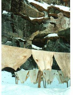 grönland Moose Art, Travel, Animals, Viajes, Animales, Animaux, Destinations, Animal, Traveling