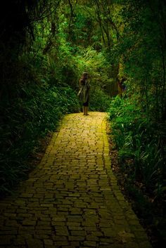 Back to the howling old owl in the woods, hunting the horny back toad.  Oh, I've finally decided my future lies  beyond the yellow brick road...